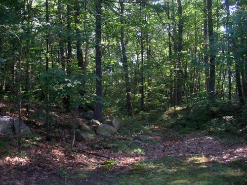 Plus 8 acres of forest